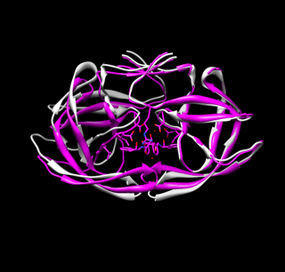 Final Aligned Molecule Faces